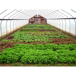 طرح توجیهی تولید محصولات خارج از فصل در گلخانه (صیفی جات گلخانه ای) به ظرفیت 6000 متر مربع